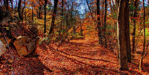 """Къде са """"зависимите събития"""" и """"статистическите колебания"""" при преход в гората?"""